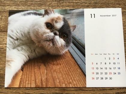 11月のニャンコカレンダー