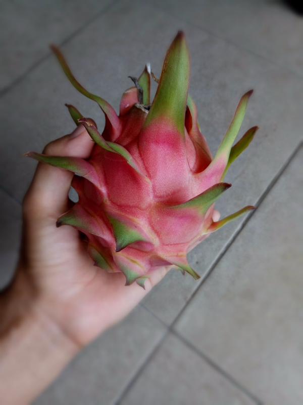 buahnagakebunsaya