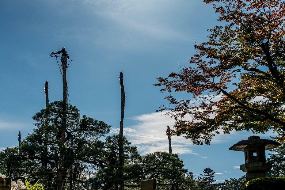 2017.11.01兼六園の雪吊り.1