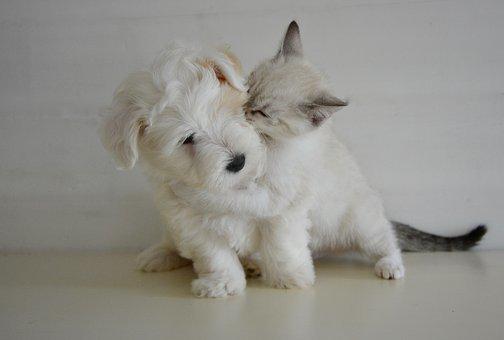 犬と猫・・・