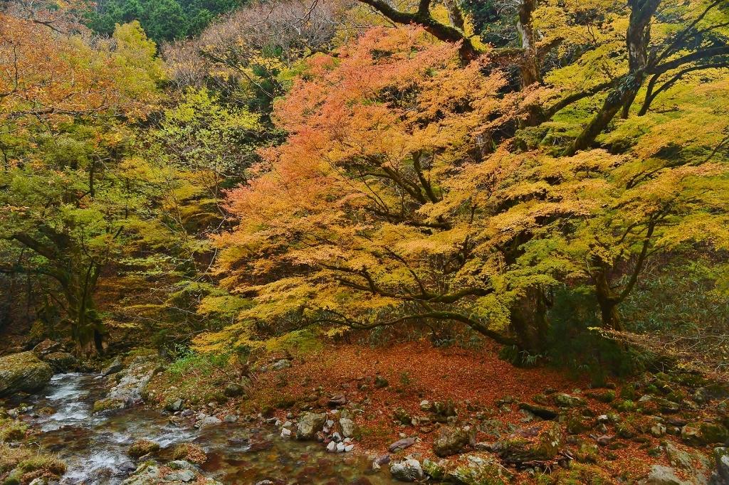 晩秋の小田深山