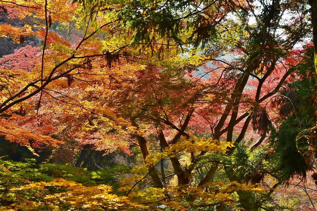 歌仙の滝公園