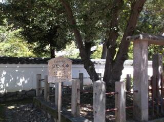 萬福寺・菩提樹