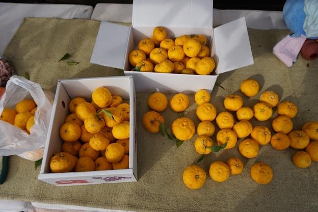 冬至 柚子収穫