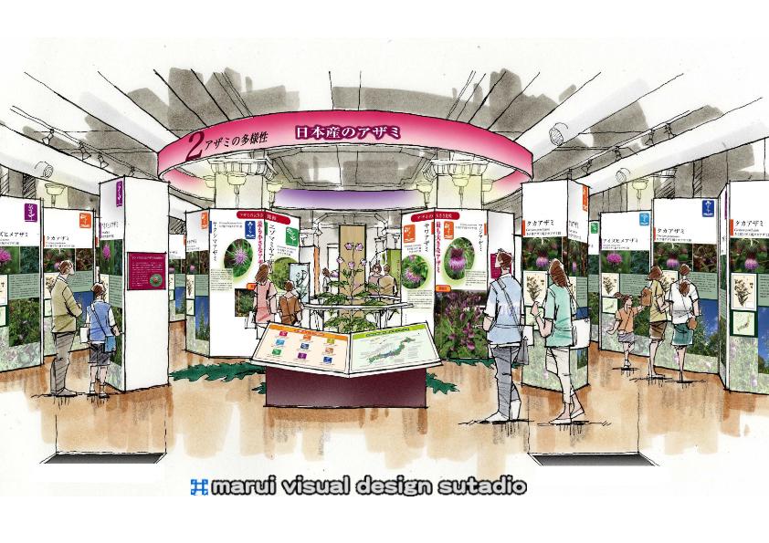 科博企画展・日本産のアザミ