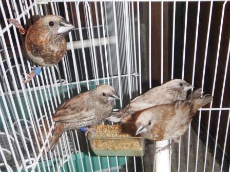 愛鳥パール