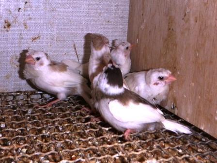 芸物巣立ち5羽2