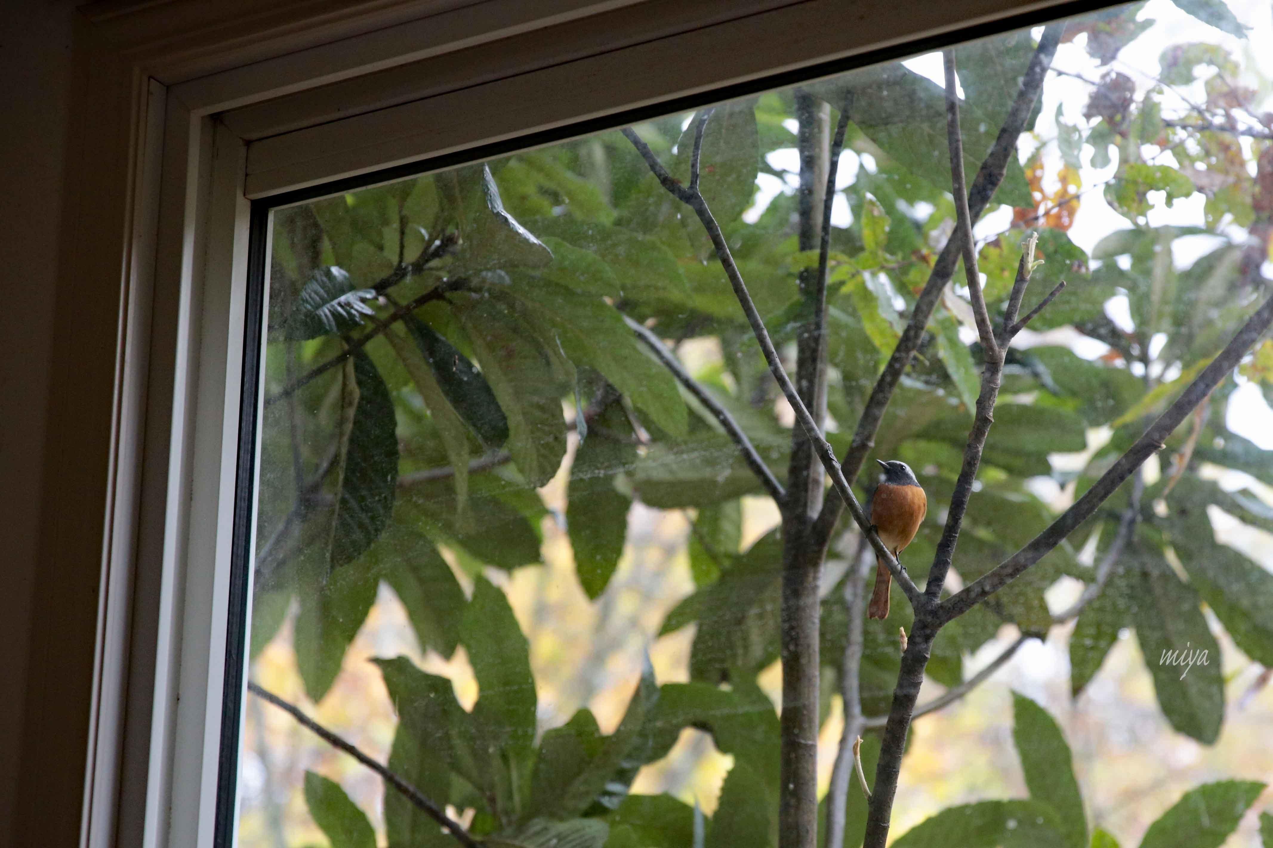 窓じょびおm032A0285