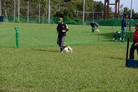 犬の運動会 練習リンク_171030_0002