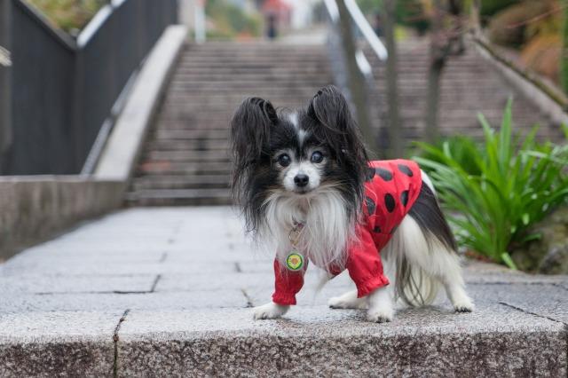スクワット犬-01
