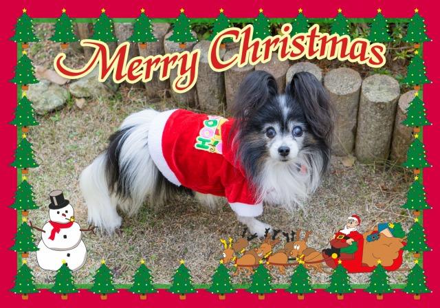 メリー・クリスマス-1