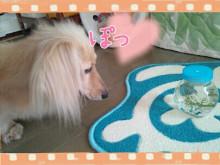Masa&Peace-2012-07-07_17.23.32.jpg