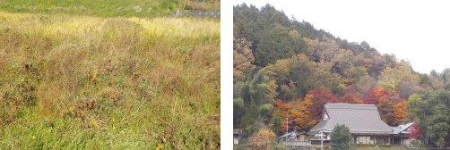 里の秋田圃11-15