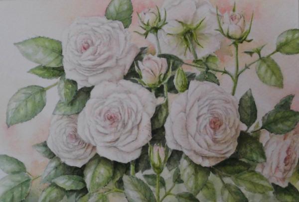 バラ 1710