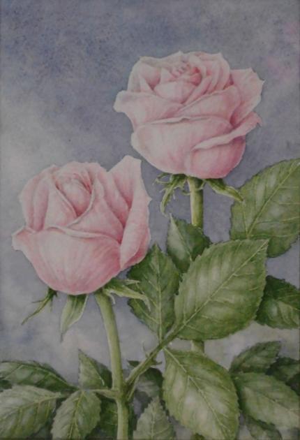 バラ 1712