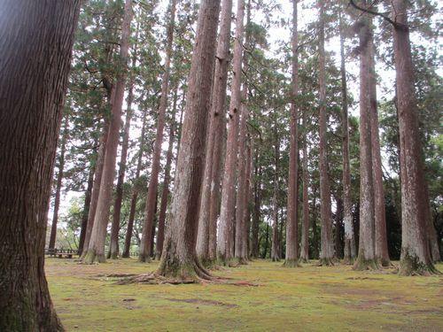 IMG_6502旧本丸跡(癒しの森)