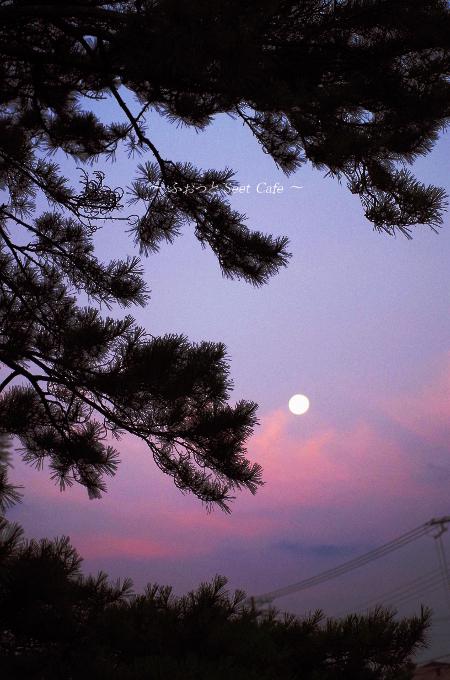 満月と松の木