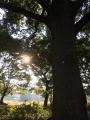 a朝陽をあびる.jpg