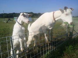 【写真】アランフィールドの柵に前足をかけて立ち上がってエサを食べるアランと順番待ちをするポール