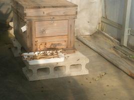 【写真】巣箱の前に置かれた砂糖水のトレーに群がるミツバチたち