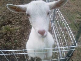 【写真】アランフィールドの柵に足をかけて餌をねだるポール