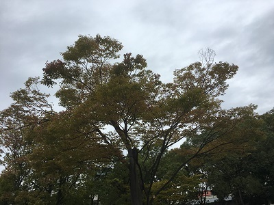 2017/10/18 (2)