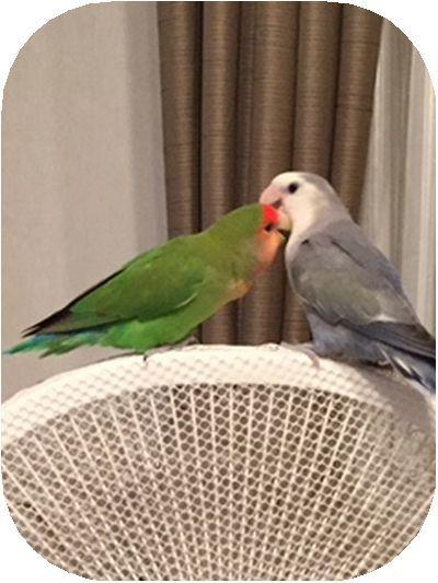 小西真由美さんの愛鳥