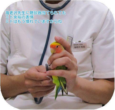 ①ミド聴診器