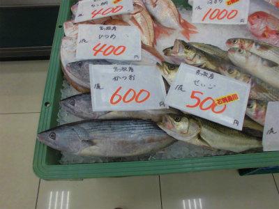 9.30魚屋2