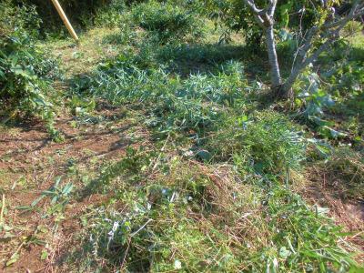 10.27草刈り1