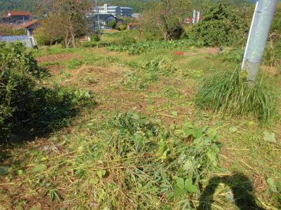 10.27草刈り2