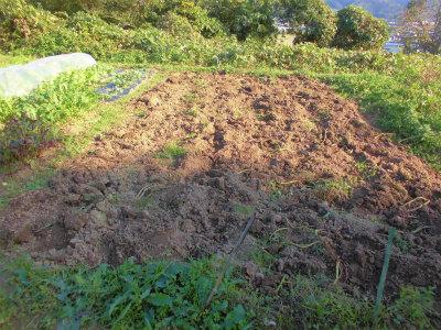 11.10ジャガイモを掘った跡