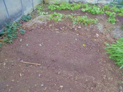 11.18青梗菜の種まき
