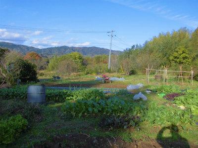 11.25冬晴れの畑