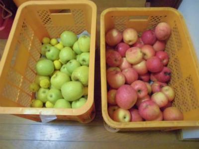 12.10貰ったリンゴ