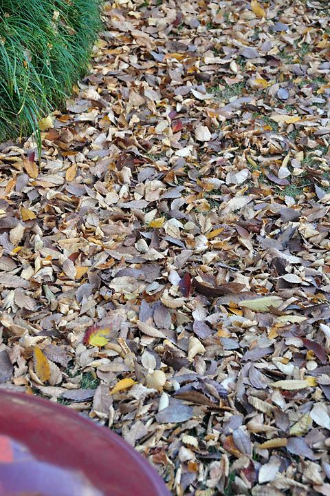 枯れ葉の賑わい