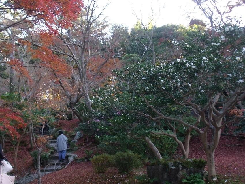 名残の紅葉と白椿