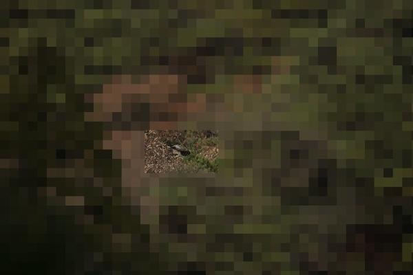 ND8_1596-2.jpg