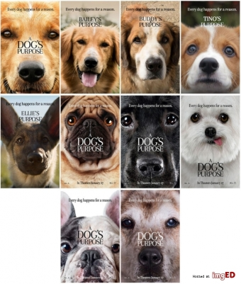 10pc-a-dog-s-purpose-2017-promo-cards-photo-card-charator-card-stickers[1]