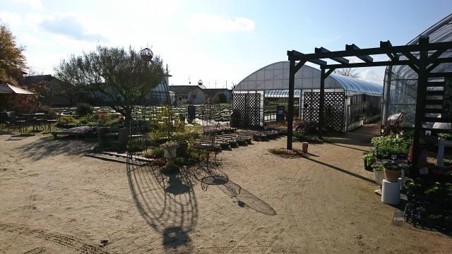 2017-11-19むらかみ農園2