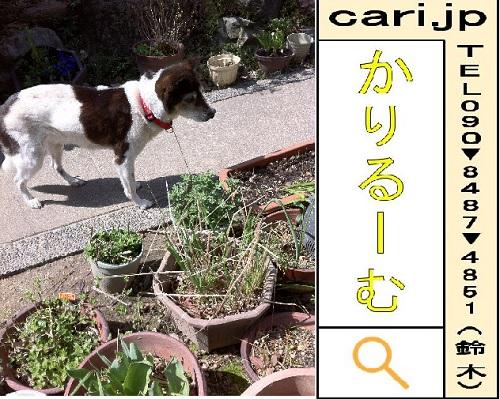 moblog_4a14107e.jpg
