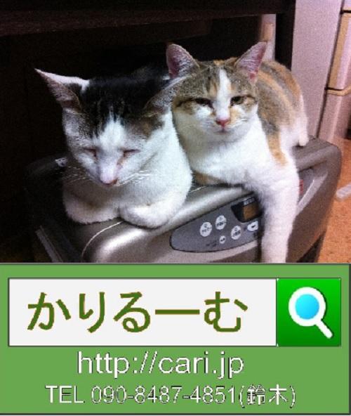 moblog_6569500e.jpg