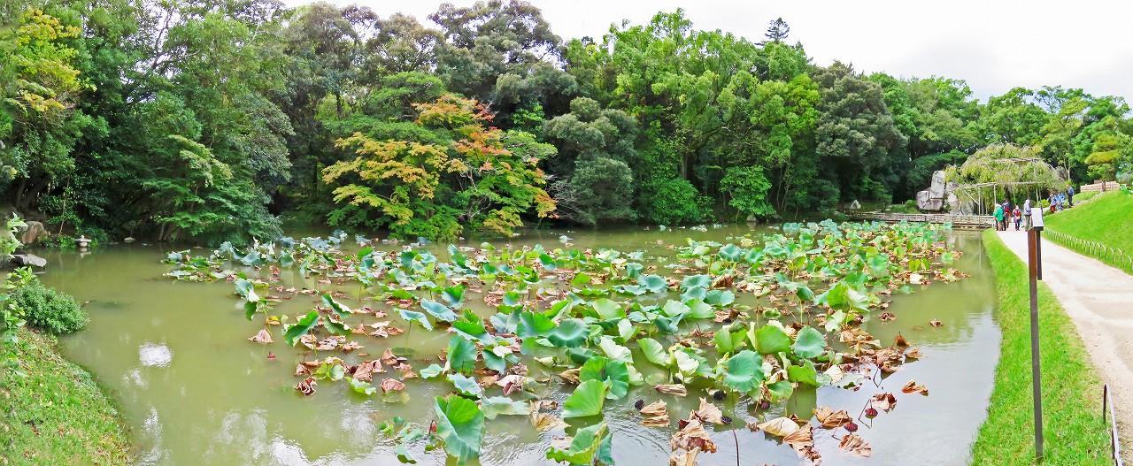 20171023 後楽園今日の台風21号通過後の園内花葉の池のワイド風景 (1)