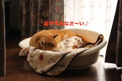 IMG_8484.jpg