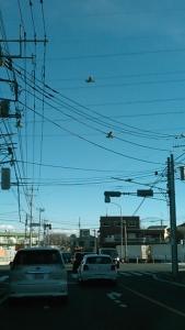 171218 電線で