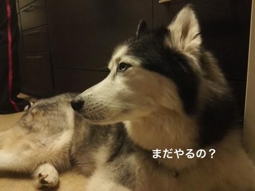 IMG_20171013_202300_Fotor.jpg