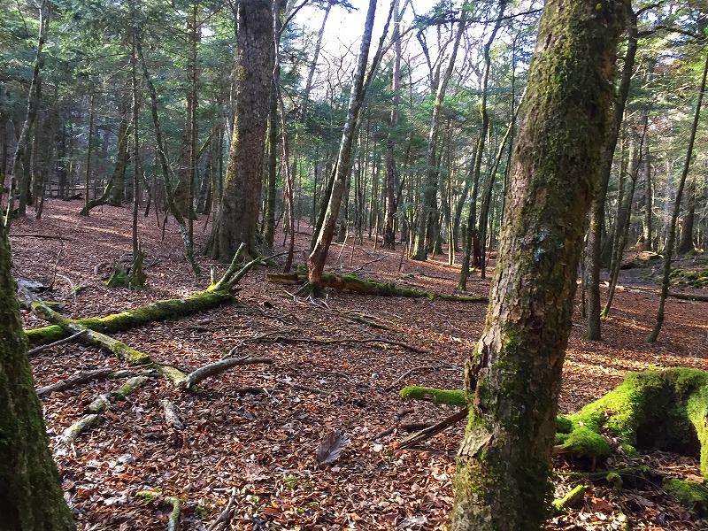針葉樹の境界