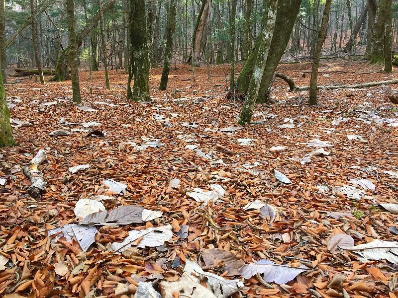 広葉樹の落葉