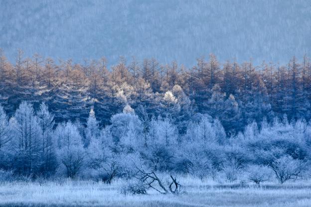 初冬の小田代ヶ原