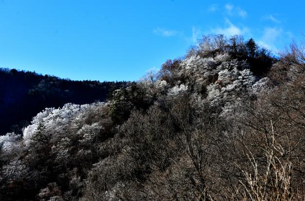 冬の桜咲く奥日光